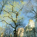 Central Park Branch Sky by Alberto  DeJesus