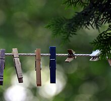 Clothes Pegs and Pine by Gayle Dolinger