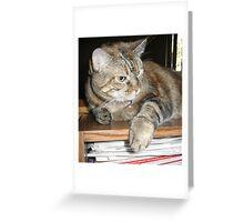 Cat on a Bookshelf Greeting Card