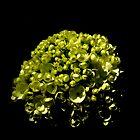 Lime-licious by Dawn di Donato