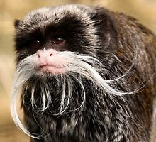 Emperor Tamarin. by Mark Hughes