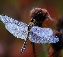Chrystal dragonfly by Julia Shepeleva