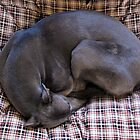 Curled up little and good by nigelphoto