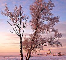 Frozen On The Seashore by SunDwn