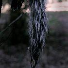 hanging squirrel.... by Alice Jowett
