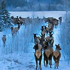North End of a Southbound Elk Herd by Yukondick