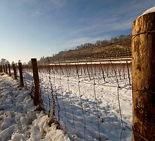Snow on vineyard by jordygraph
