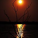 Moon Reflecting in the Lake With Old Tree by Lisa Holmgreen
