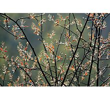 Spring branches Photographic Print