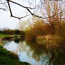Grantchester Meadows 11 by artfulvistas