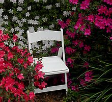 Tea Time in the Azalea Garden by Dawn di Donato