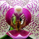 Erotic Orchid by SteveBB