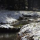 snowy Oregon forest, fox creek 10 by Dawna Morton
