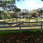 Peeks Through Picket Fences by Charldia