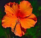 Orange Delight by Margaret Stevens