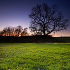 The Dance of the Tree Silhouettes by Andy Freer