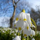 White Spring Flower by HeklaHekla