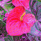 Anthurium in Colour by Margaret Stevens