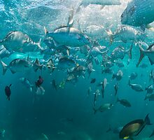 Feeding Frenzy 2 by Flux Photography