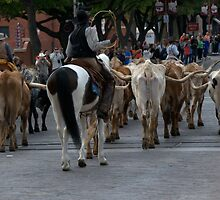 Cattle Drive Thru The Streets Of The Fort Worth Stockyards 3 by jphall