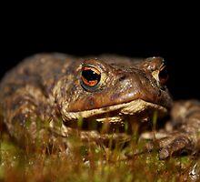 Common Toad by Robbie Labanowski