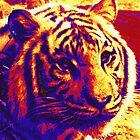 pop art tiger by jashumbert