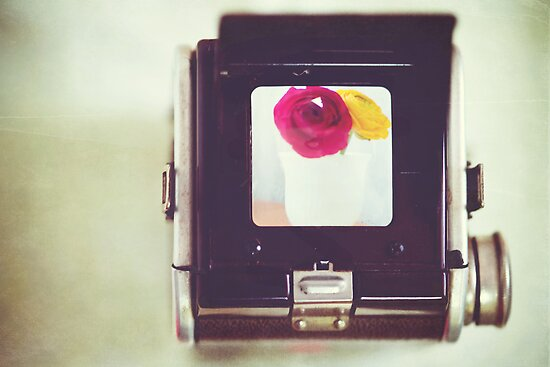 Through the Viewfinder by Isabelle Lafrance