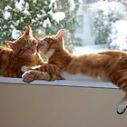 Ginger twins by Kathryn  Young