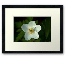 Simple beauty of one little flower Framed Print