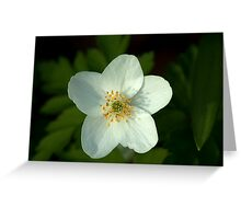 Simple beauty of one little flower Greeting Card