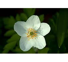 Simple beauty of one little flower Photographic Print