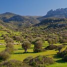 Springtime in Cyprus  by Alex Cassels