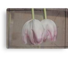 Pale Pink Canvas Print