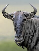 Wonderful Wilderbeest by Macky