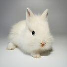 Little white rabbit by jordygraph