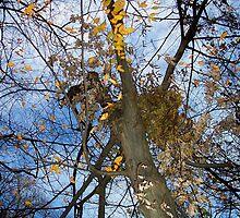 Autumn rememberance by Nella Khanis