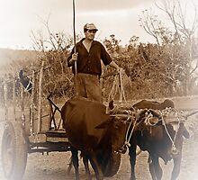 Ox drawn cart, Vinales, Cuba (Sepia version) by buttonpresser