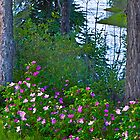 Wild Roses along the Yukon by Yukondick
