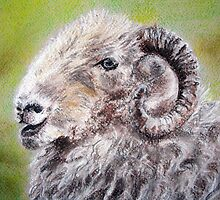 herdwick sheep pastel by lalik