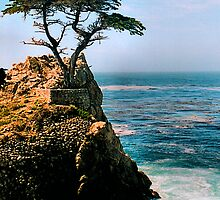 The Lone Cypress by djphoto