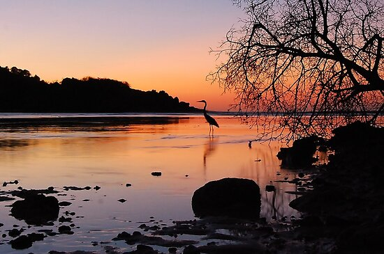 Heron Sunset 2 by Leon Heyns