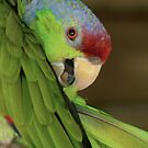 Amazon Lilac Crowned Parrot by Sheryl Unwin