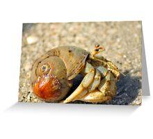 Hermit Crab Greeting Card