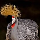 East African Crowned Crane by LucyAbrao
