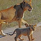 Lioness and cub(Mom wait ,i am not ready to go yet!) by jozi1