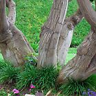 Thick Tree Trunk - Hotel Hacienda Courtyard - El Segundo, California by Phil Roberson