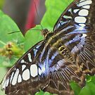 The Blue Clipper by lorilee