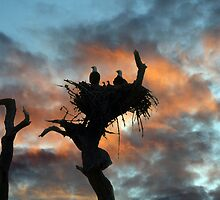 EAGLE FAMILY SUNSET by TomBaumker