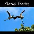 Aerial Antics by Webitect