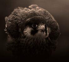 Bird of Prey by cameravan1